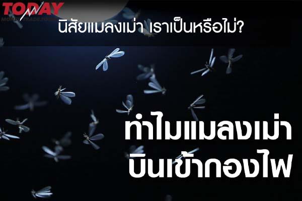 นิสัยแมลงเม่า เราเป็นหรือไม่?